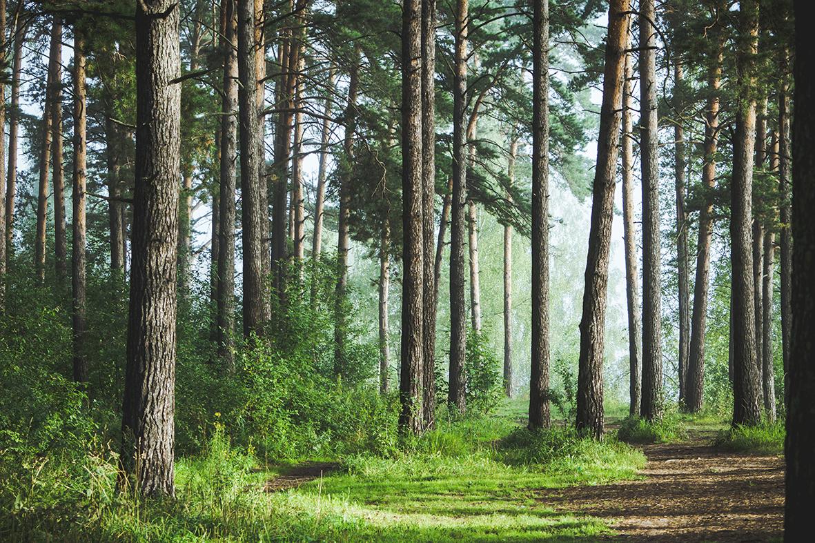 Investitionsprogramm Wald